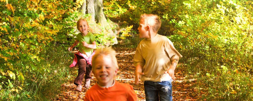 Kinder rennen im leuchtenden Herbstwald
